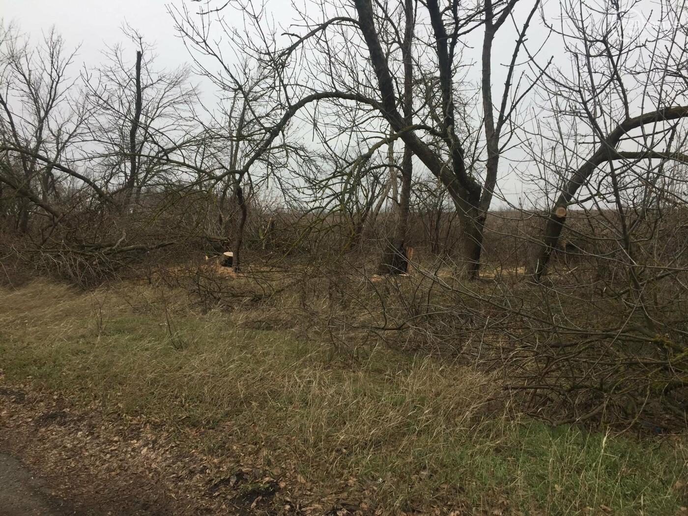 Черные лесорубы: в Мариуполе  беспощадно уничтожается лесополоса на дороге для европейцев, - ФОТО, ВИДЕО, фото-3