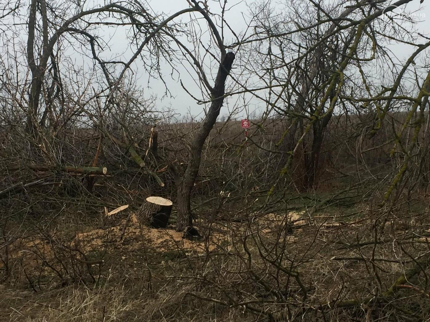Черные лесорубы: в Мариуполе  беспощадно уничтожается лесополоса на дороге для европейцев, - ФОТО, ВИДЕО, фото-7