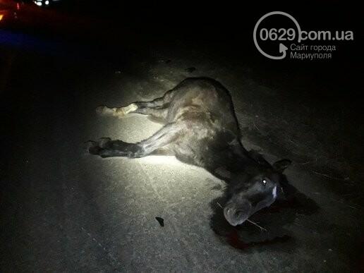 Под Мариуполем легковой автомобиль сбил лошадь, - ФОТО, фото-5