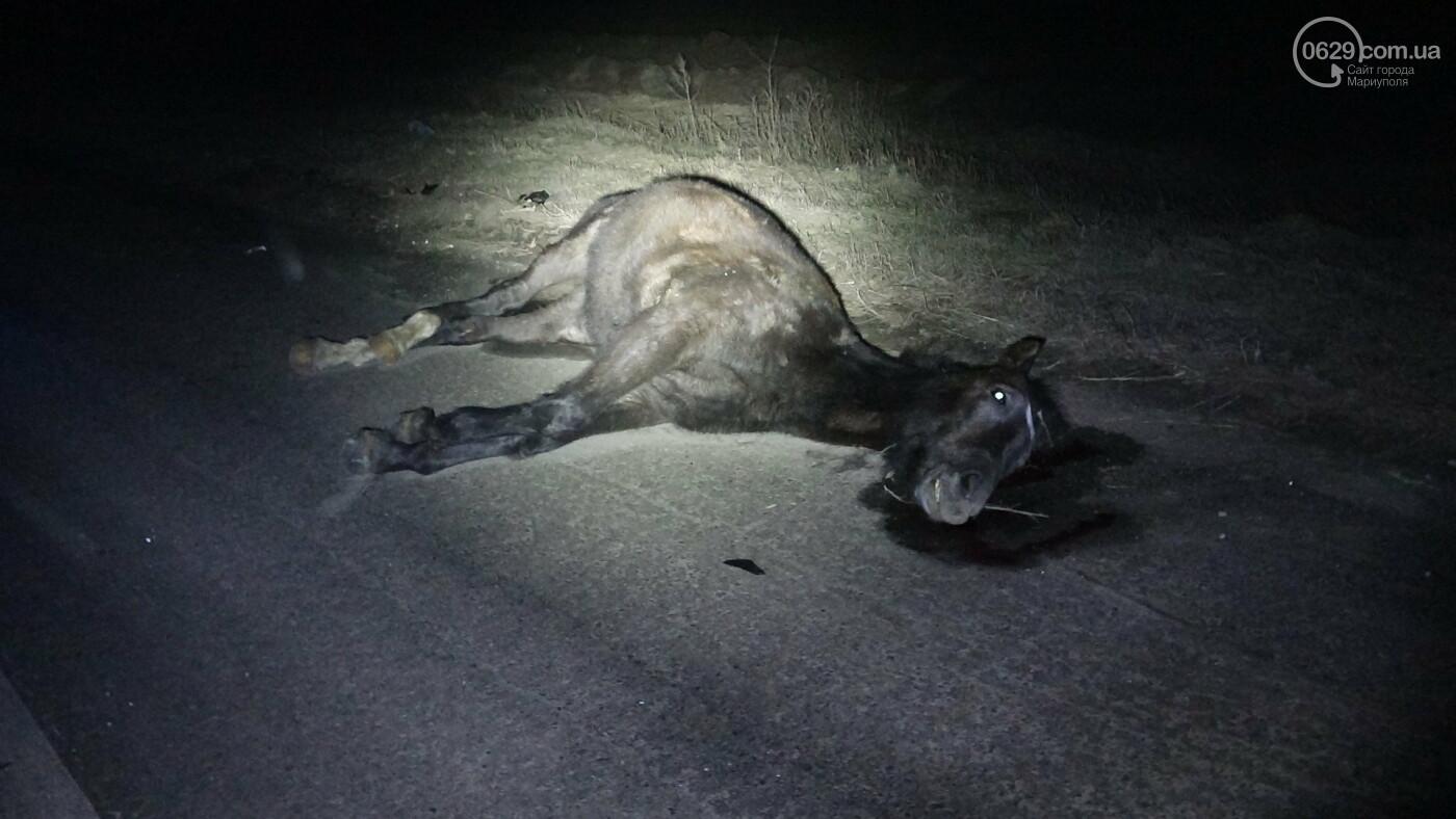 Под Мариуполем легковой автомобиль сбил лошадь, - ФОТО, фото-10