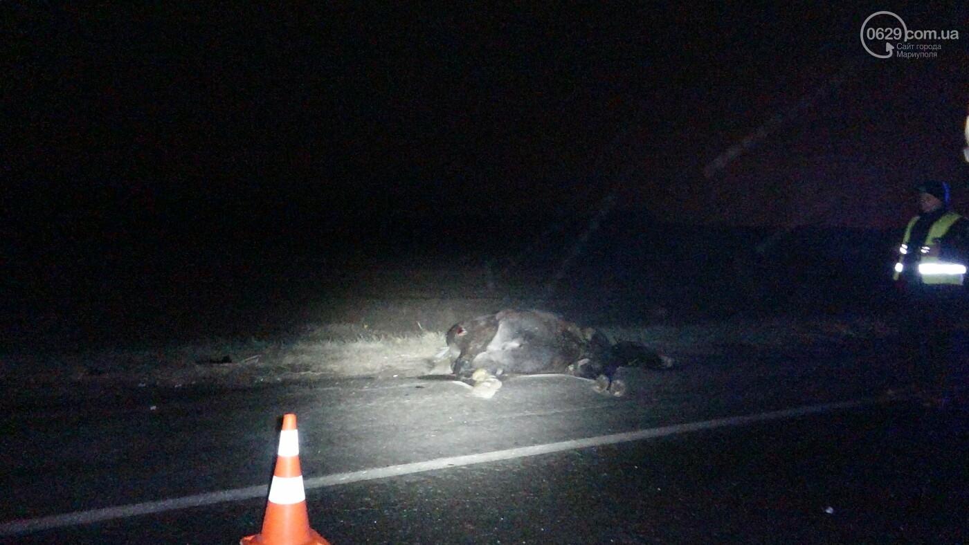 Под Мариуполем легковой автомобиль сбил лошадь, - ФОТО, фото-12