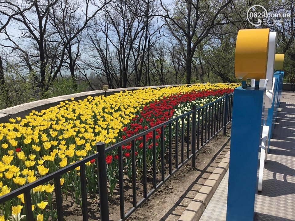 """В мариупольском Городском саду """"вымирают"""" тюльпаны, - ФОТО, ВИДЕО, фото-4"""