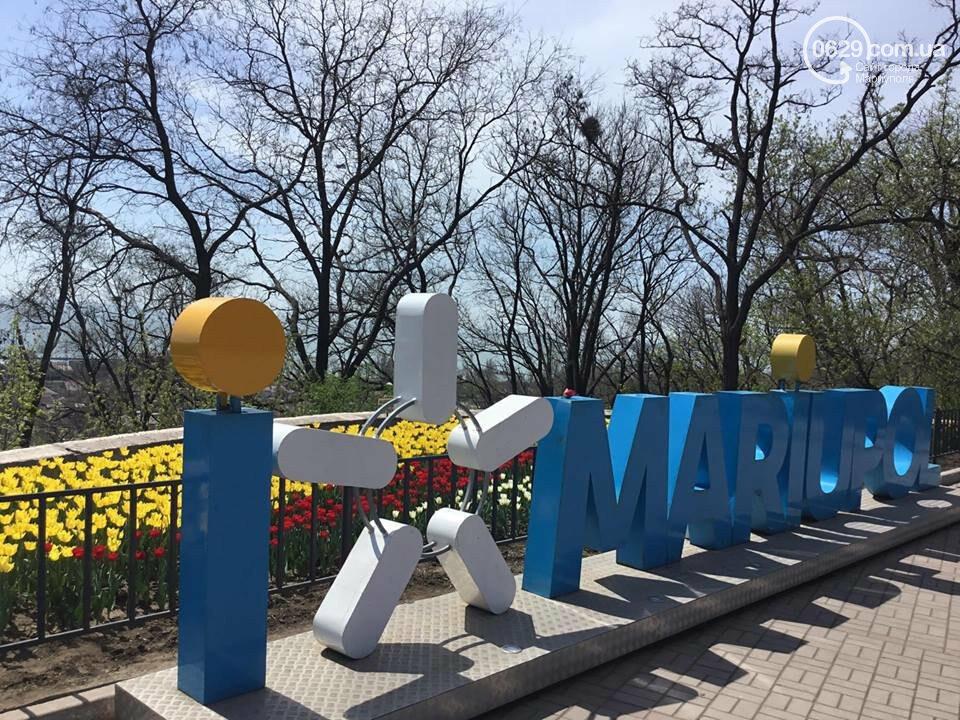 """В мариупольском Городском саду """"вымирают"""" тюльпаны, - ФОТО, ВИДЕО, фото-3"""
