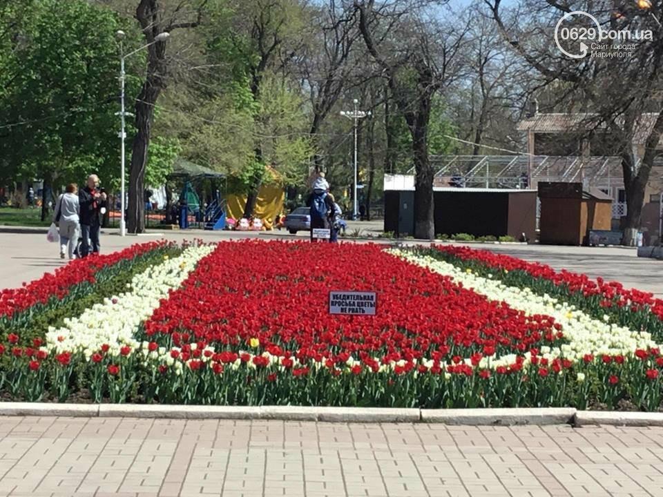 """В мариупольском Городском саду """"вымирают"""" тюльпаны, - ФОТО, ВИДЕО, фото-2"""