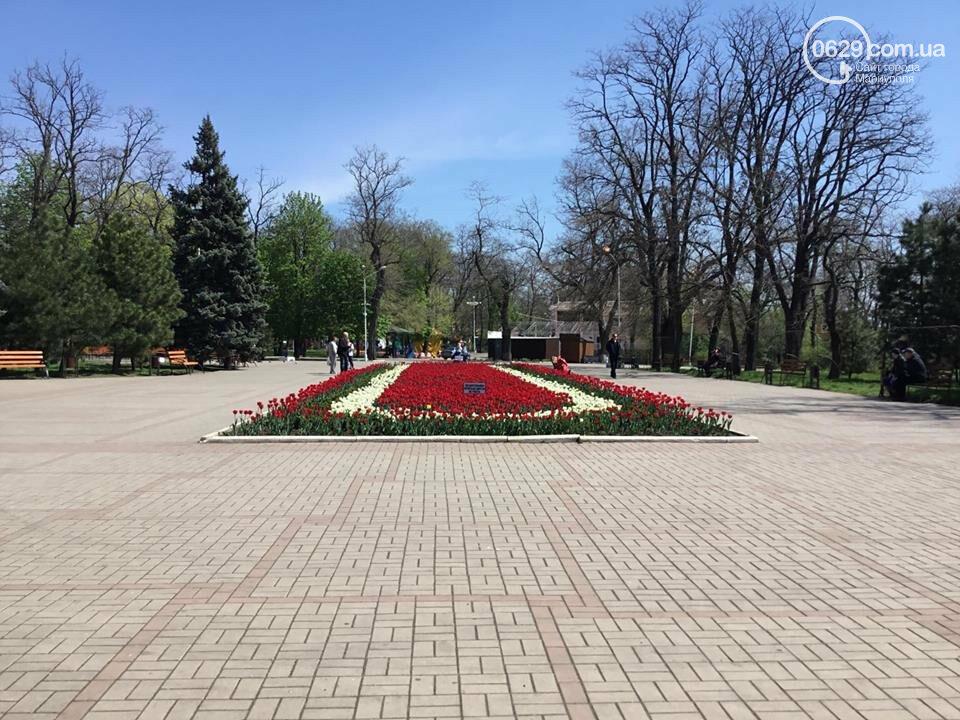 """В мариупольском Городском саду """"вымирают"""" тюльпаны, - ФОТО, ВИДЕО, фото-5"""