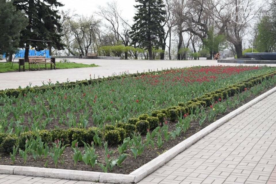 """В мариупольском Городском саду """"вымирают"""" тюльпаны, - ФОТО, ВИДЕО, фото-11"""
