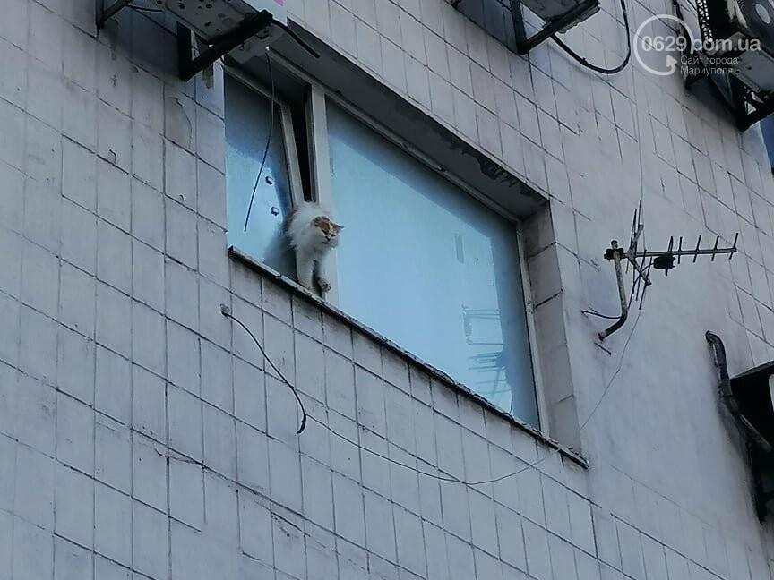 В центре Мариуполя кот застрял в пластиковом окне,- ФОТО, фото-1