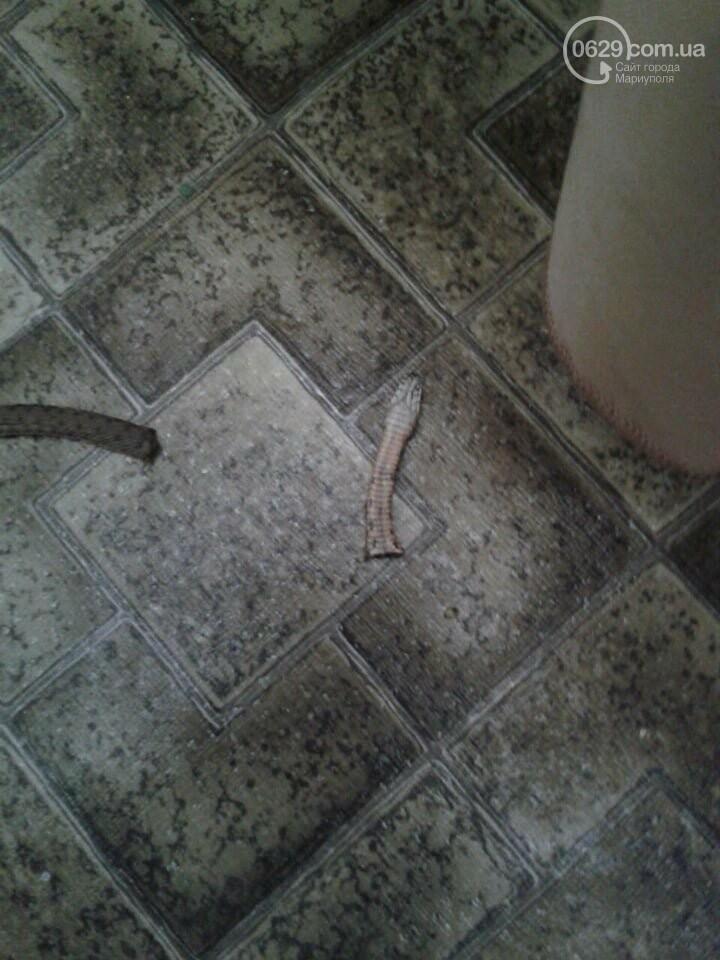 В центре Мариуполя в квартиру заползла змея,- ФОТО, фото-1
