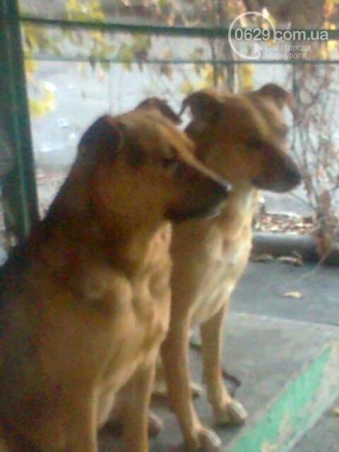 """Что будет с собаками Академии полиции после того, как их  отловили представители МКП """"Щасливі тварини"""", фото-1"""