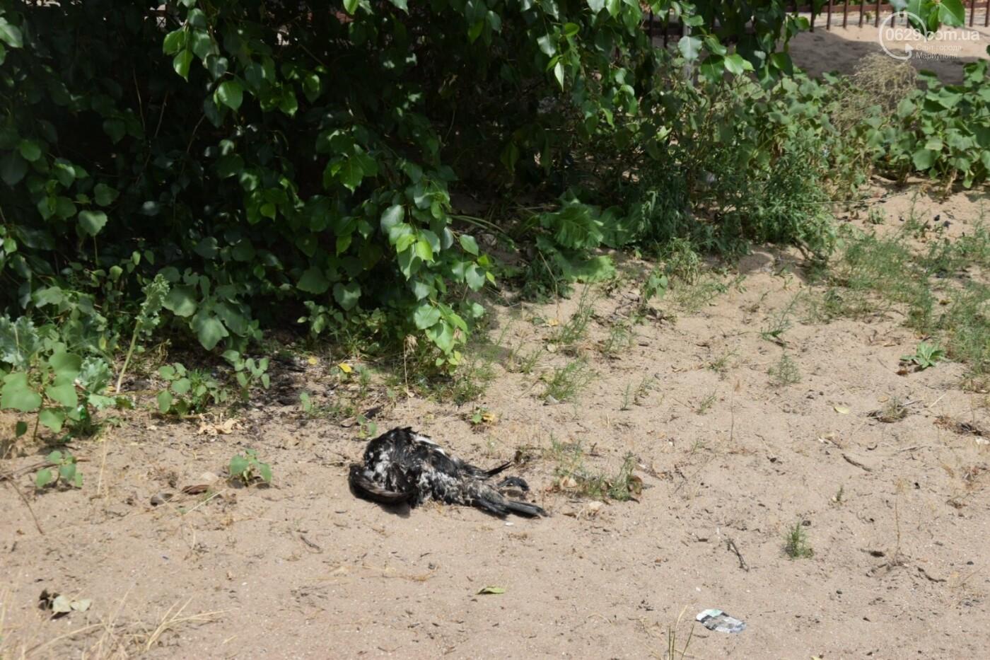 ТОП лучших пляжей Мариуполя, - ФОТО, фото-20