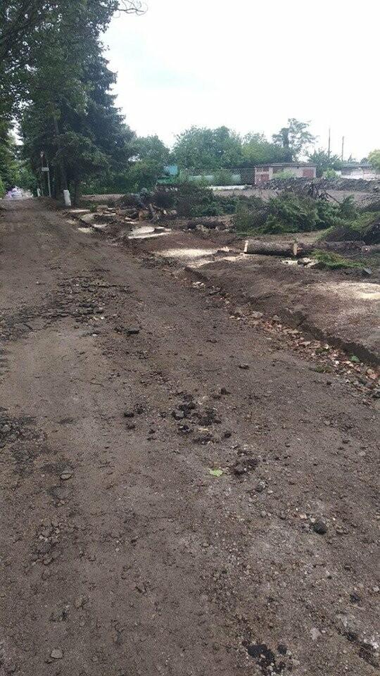 В Мариуполе  ради нового плаца в Академии полиции уничтожают огромные ели, - ФОТО, фото-8
