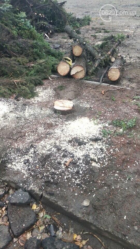 В Мариуполе  ради нового плаца в Академии полиции уничтожают огромные ели, - ФОТО, фото-7