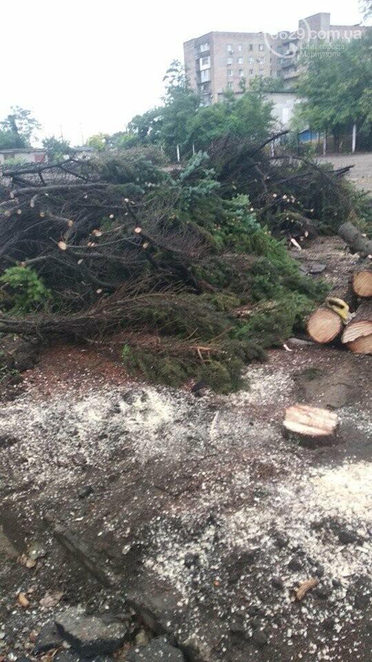 В Мариуполе  ради нового плаца в Академии полиции уничтожают огромные ели, - ФОТО, фото-6