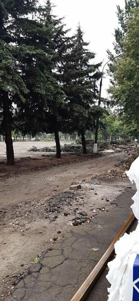 В Мариуполе  ради нового плаца в Академии полиции уничтожают огромные ели, - ФОТО, фото-3