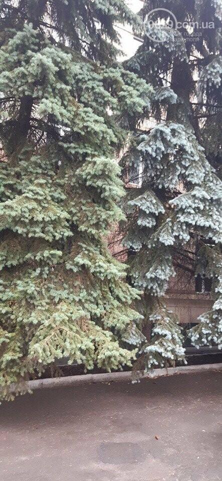 В Мариуполе  ради нового плаца в Академии полиции уничтожают огромные ели, - ФОТО, фото-1