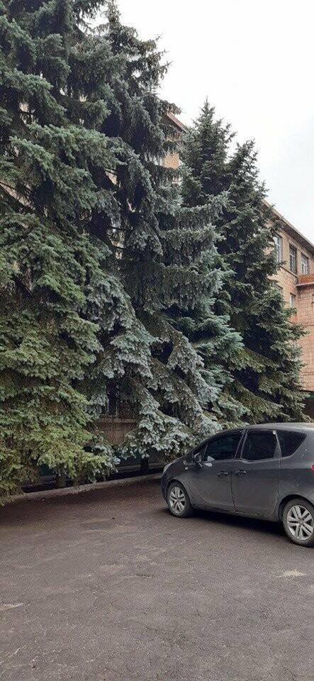 В Мариуполе  ради нового плаца в Академии полиции уничтожают огромные ели, - ФОТО, фото-2