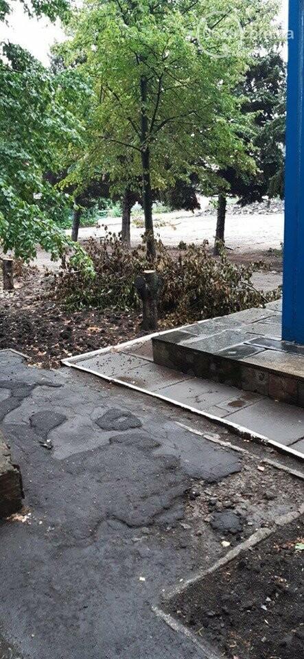 В Мариуполе  ради нового плаца в Академии полиции уничтожают огромные ели, - ФОТО, фото-4