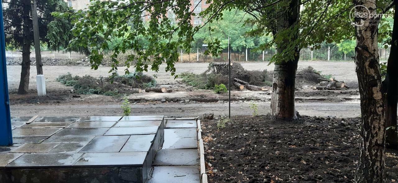 В Мариуполе  ради нового плаца в Академии полиции уничтожают огромные ели, - ФОТО, фото-5