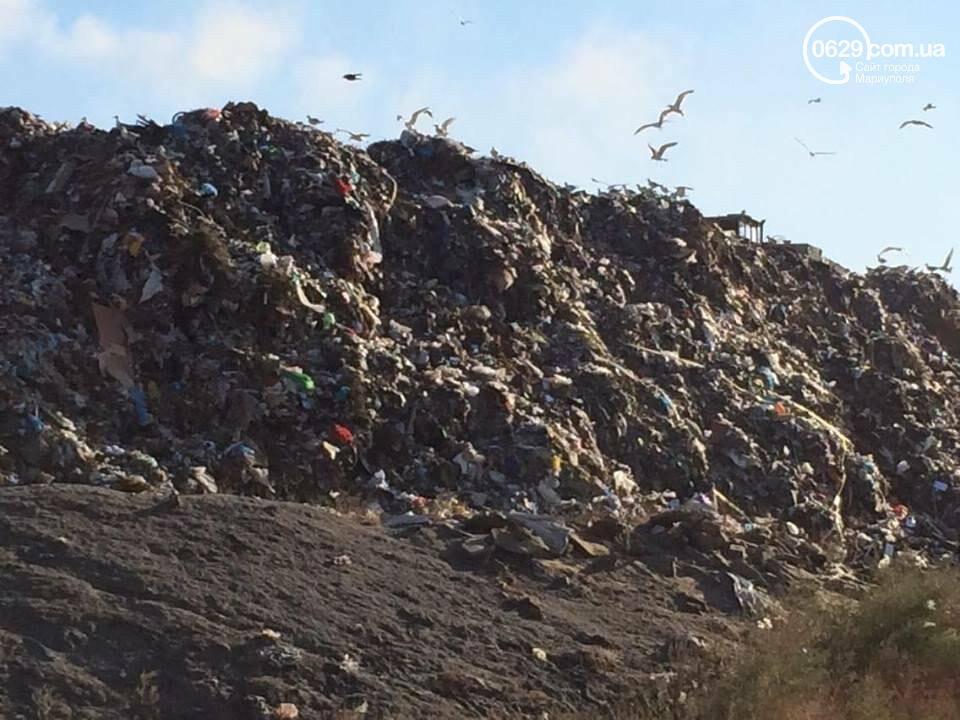 Можно ли зарабатывать на собственном мусоре? Опыт мариупольской семьи, фото-6