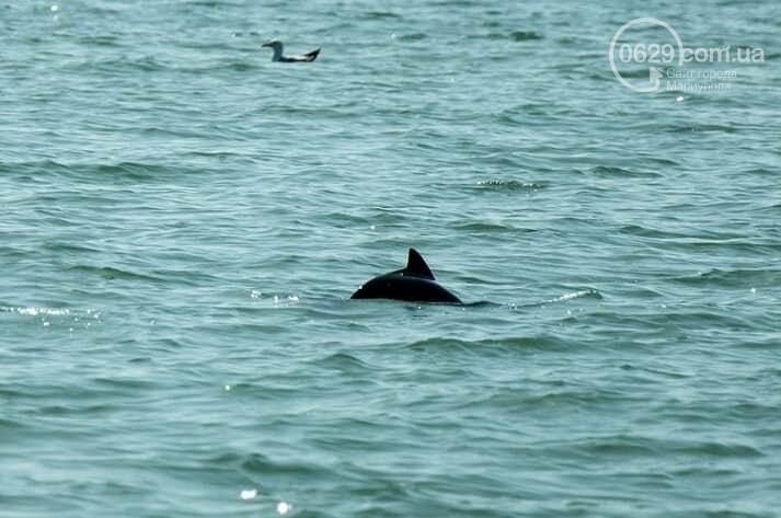 Возле Белосарайской косы мариуполец увидел стаю дельфинов, - ФОТО, фото-1