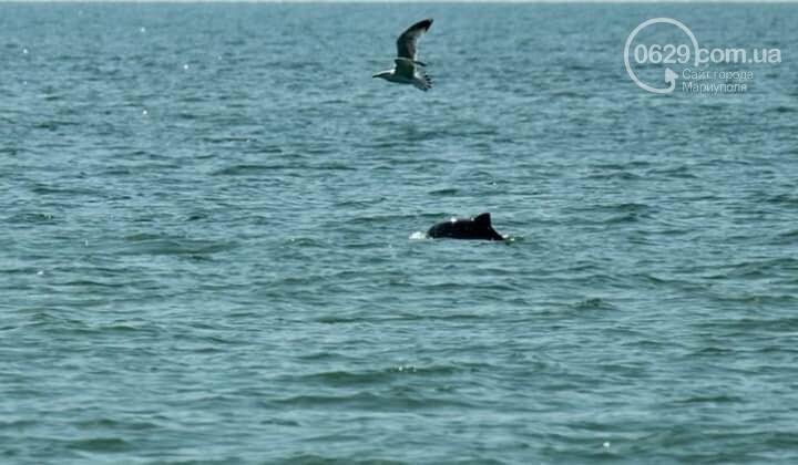 Возле Белосарайской косы мариуполец увидел стаю дельфинов, - ФОТО, фото-2