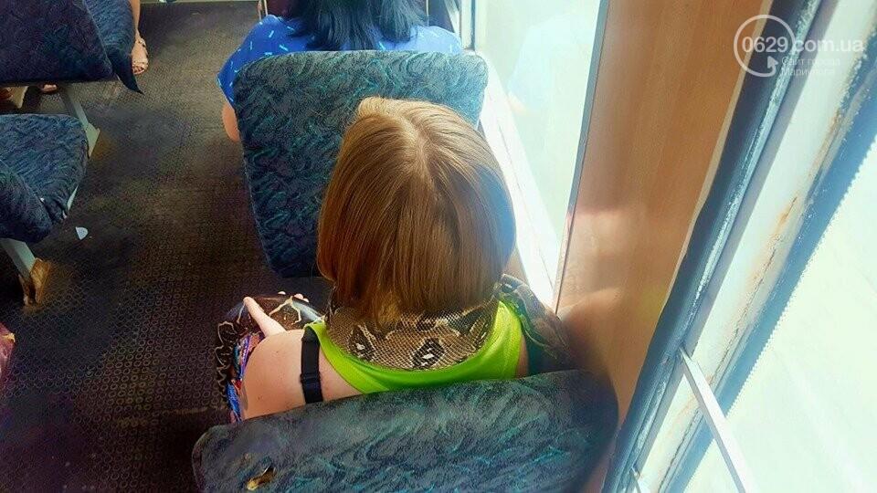 В Мариуполе пассажиров маршрутки напугала девушка с питоном, - ФОТОФАКТ, фото-1