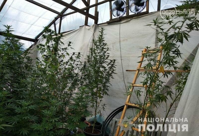 В Мариуполе мужчина вырастил две теплицы конопли, - ФОТО, фото-3