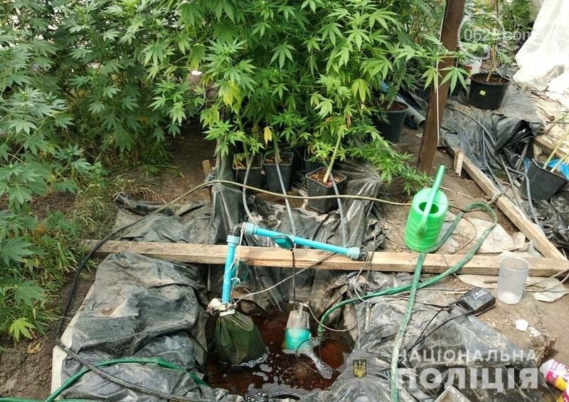 В Мариуполе мужчина вырастил две теплицы конопли, - ФОТО, фото-5