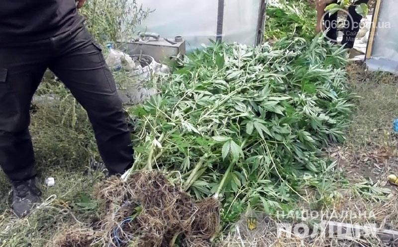 В Мариуполе мужчина вырастил две теплицы конопли, - ФОТО, фото-2