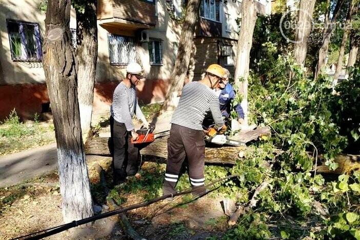 Спасатели убрали дерево, которое упало на линии электропередач, - ФОТО, фото-1