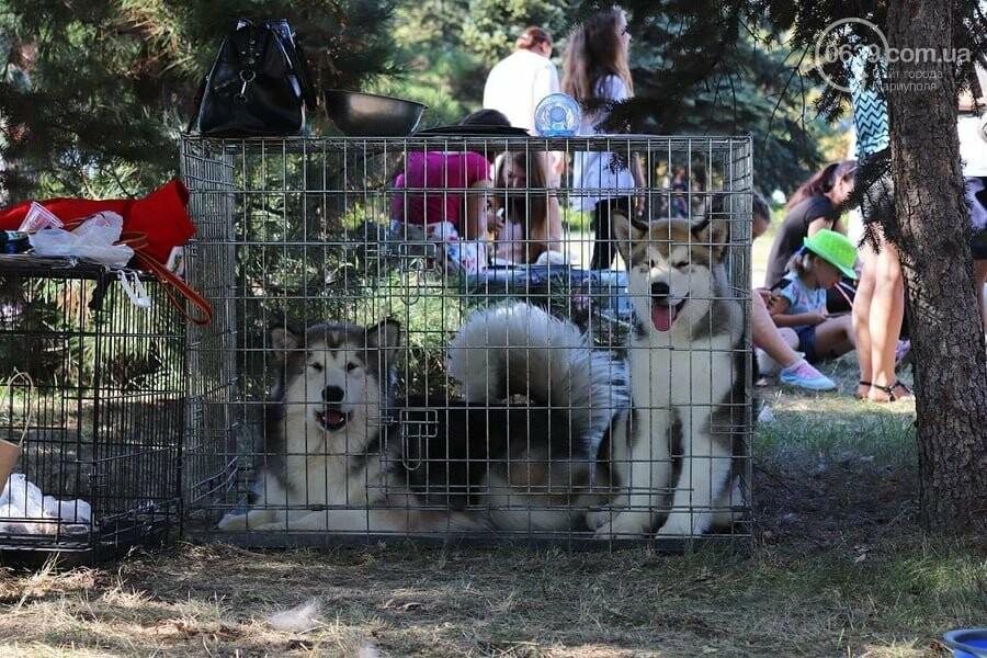В Мариуполе фокстерьер Щаслав стал самой красивой собакой, а шпиц Диор – самой послушной, - ФОТОРЕПОРТАЖ, фото-54