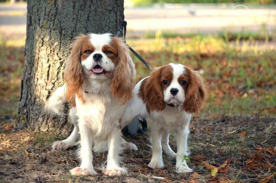 В Мариуполе фокстерьер Щаслав стал самой красивой собакой, а шпиц Диор – самой послушной, - ФОТОРЕПОРТАЖ, фото-31