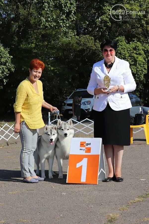 В Мариуполе фокстерьер Щаслав стал самой красивой собакой, а шпиц Диор – самой послушной, - ФОТОРЕПОРТАЖ, фото-37