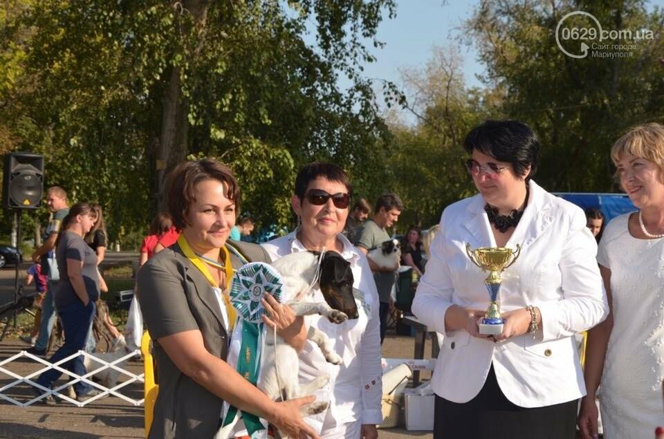 В Мариуполе фокстерьер Щаслав стал самой красивой собакой, а шпиц Диор – самой послушной, - ФОТОРЕПОРТАЖ, фото-53
