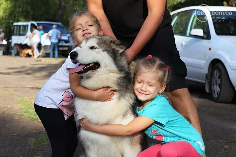 В Мариуполе фокстерьер Щаслав стал самой красивой собакой, а шпиц Диор – самой послушной, - ФОТОРЕПОРТАЖ, фото-15