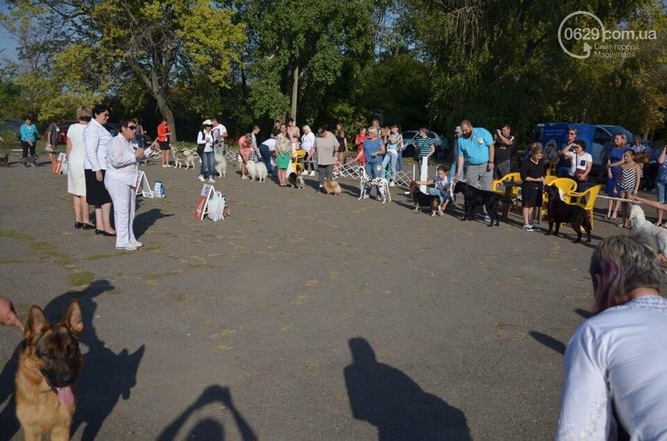 В Мариуполе фокстерьер Щаслав стал самой красивой собакой, а шпиц Диор – самой послушной, - ФОТОРЕПОРТАЖ, фото-51