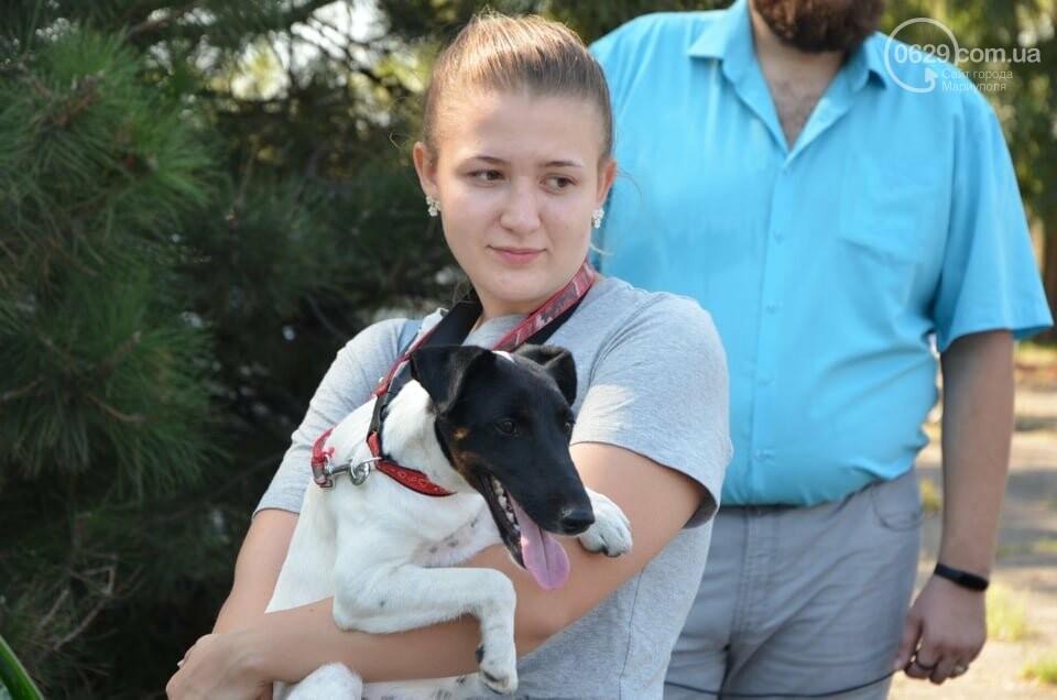 В Мариуполе фокстерьер Щаслав стал самой красивой собакой, а шпиц Диор – самой послушной, - ФОТОРЕПОРТАЖ, фото-16