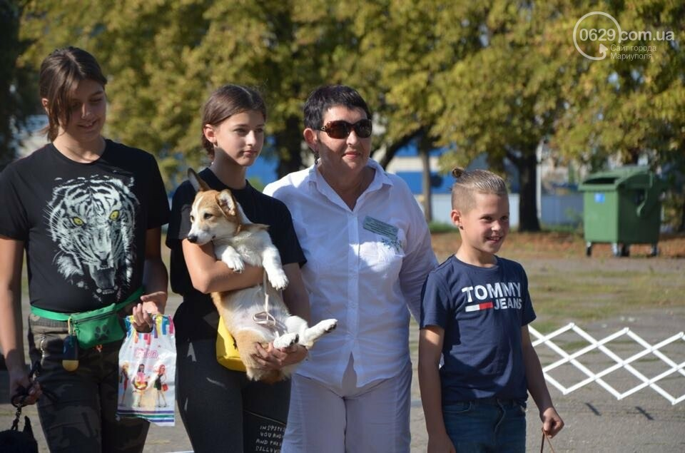 В Мариуполе фокстерьер Щаслав стал самой красивой собакой, а шпиц Диор – самой послушной, - ФОТОРЕПОРТАЖ, фото-33