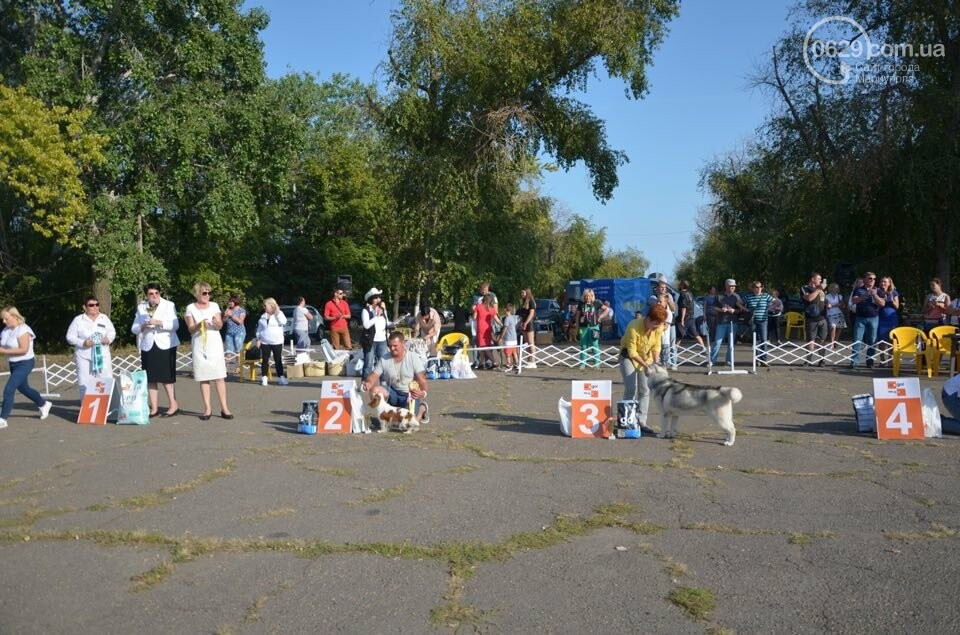 В Мариуполе фокстерьер Щаслав стал самой красивой собакой, а шпиц Диор – самой послушной, - ФОТОРЕПОРТАЖ, фото-48