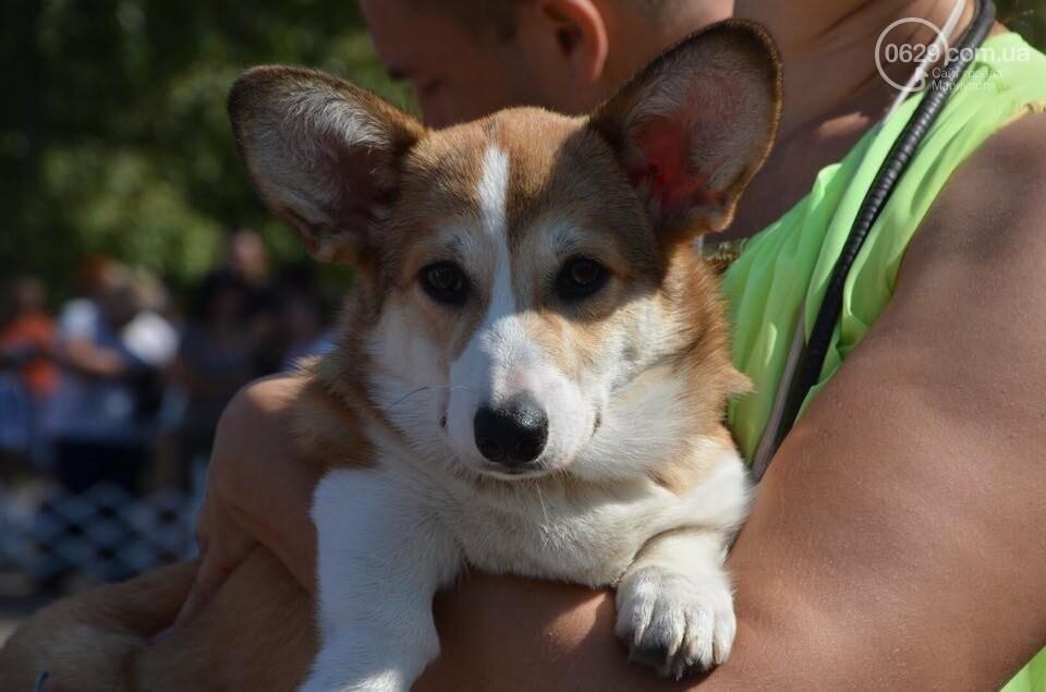 В Мариуполе фокстерьер Щаслав стал самой красивой собакой, а шпиц Диор – самой послушной, - ФОТОРЕПОРТАЖ, фото-6