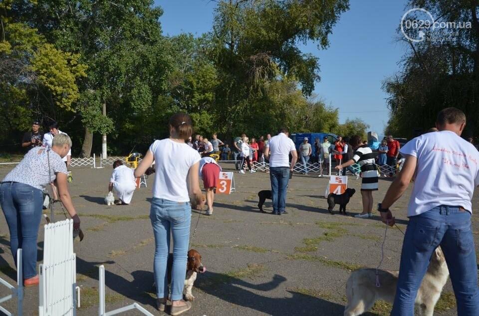 В Мариуполе фокстерьер Щаслав стал самой красивой собакой, а шпиц Диор – самой послушной, - ФОТОРЕПОРТАЖ, фото-43
