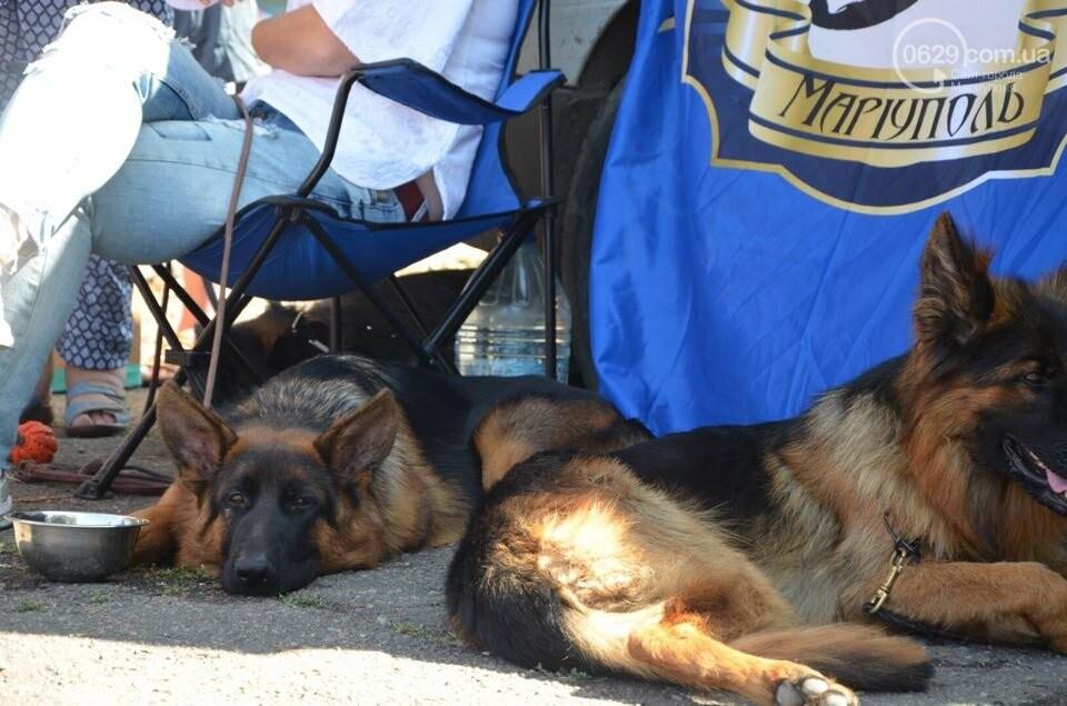 В Мариуполе фокстерьер Щаслав стал самой красивой собакой, а шпиц Диор – самой послушной, - ФОТОРЕПОРТАЖ, фото-9
