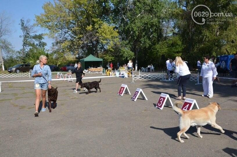 В Мариуполе фокстерьер Щаслав стал самой красивой собакой, а шпиц Диор – самой послушной, - ФОТОРЕПОРТАЖ, фото-58