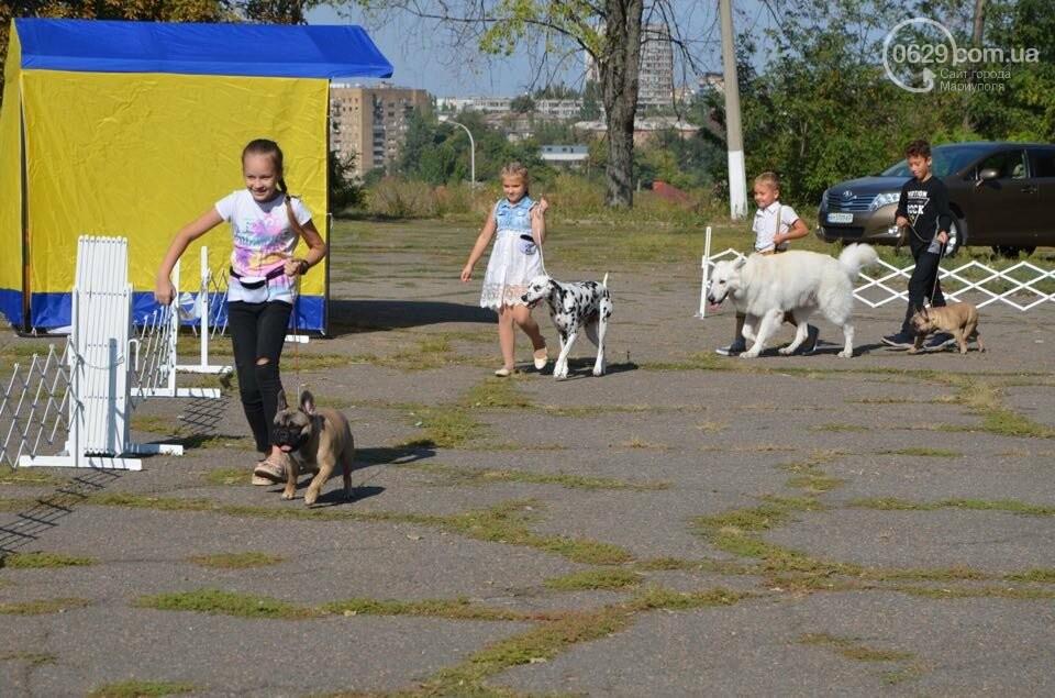 В Мариуполе фокстерьер Щаслав стал самой красивой собакой, а шпиц Диор – самой послушной, - ФОТОРЕПОРТАЖ, фото-40
