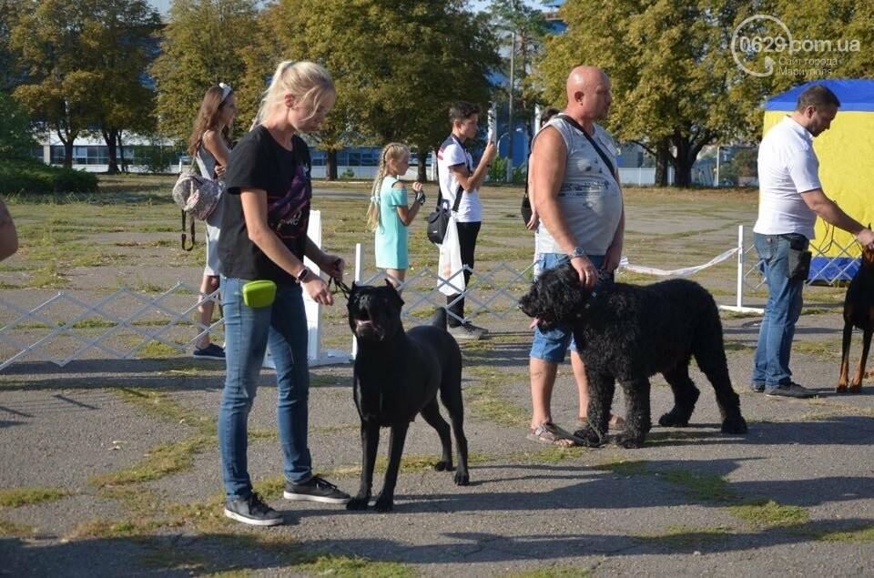 В Мариуполе фокстерьер Щаслав стал самой красивой собакой, а шпиц Диор – самой послушной, - ФОТОРЕПОРТАЖ, фото-49