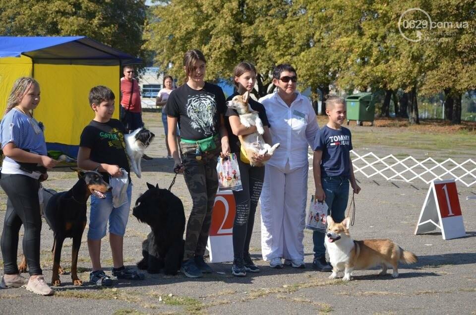В Мариуполе фокстерьер Щаслав стал самой красивой собакой, а шпиц Диор – самой послушной, - ФОТОРЕПОРТАЖ, фото-41