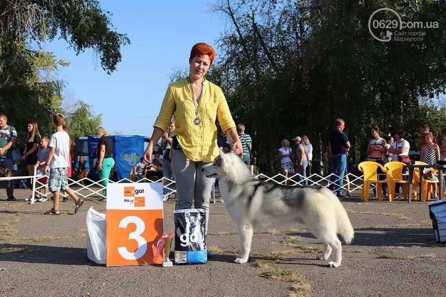 В Мариуполе фокстерьер Щаслав стал самой красивой собакой, а шпиц Диор – самой послушной, - ФОТОРЕПОРТАЖ, фото-36