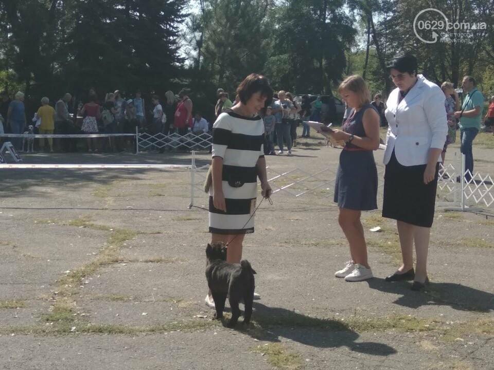 В Мариуполе фокстерьер Щаслав стал самой красивой собакой, а шпиц Диор – самой послушной, - ФОТОРЕПОРТАЖ, фото-55