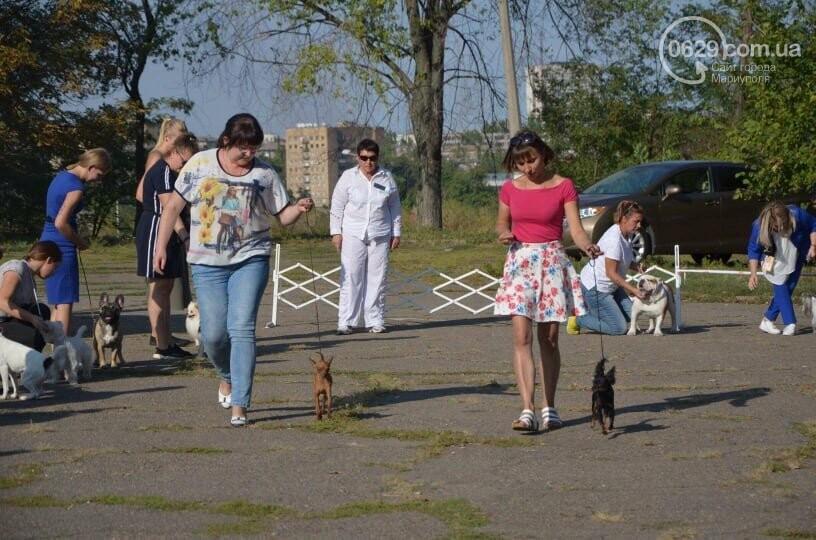 В Мариуполе фокстерьер Щаслав стал самой красивой собакой, а шпиц Диор – самой послушной, - ФОТОРЕПОРТАЖ, фото-28