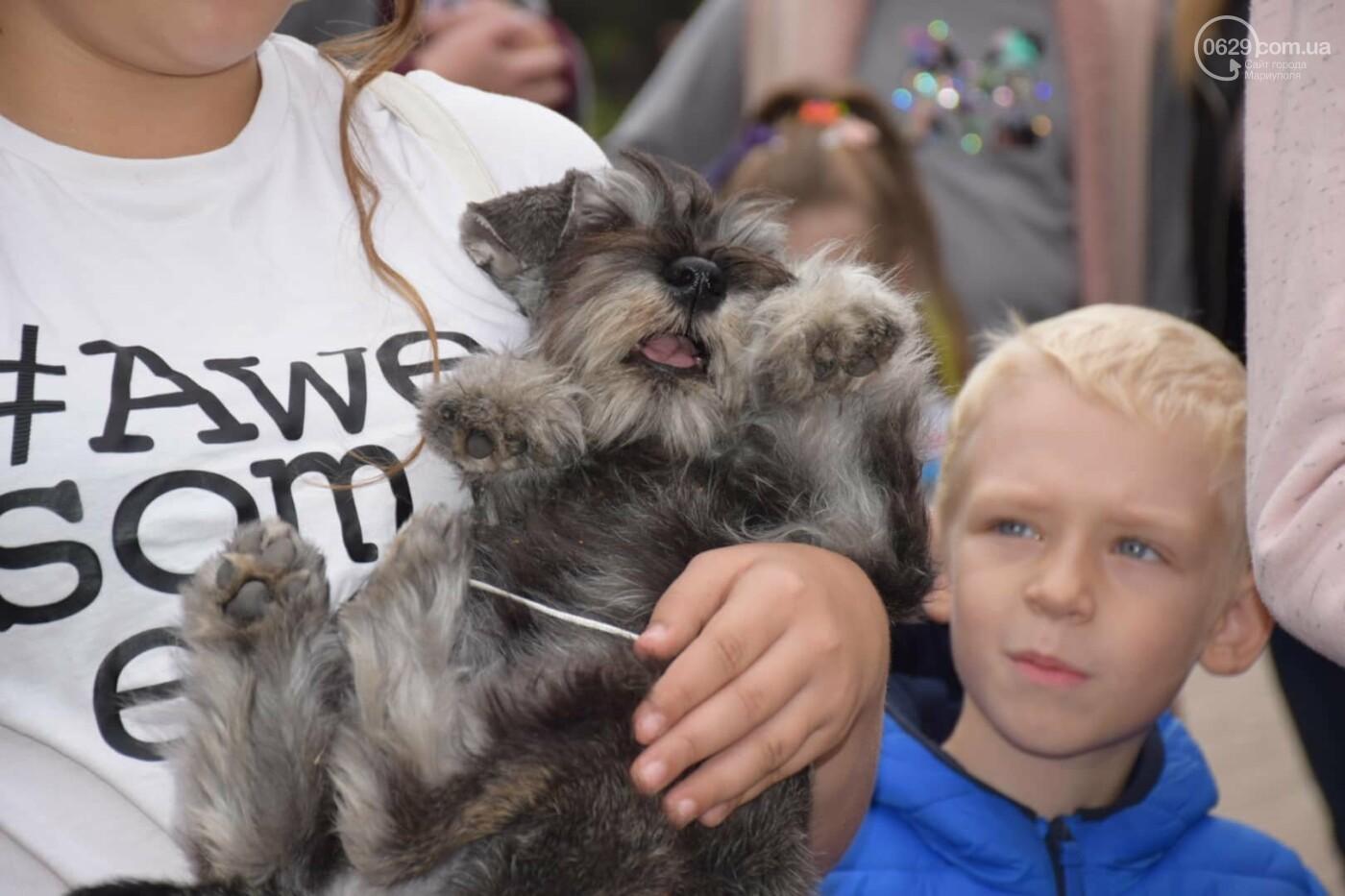 В Мариуполе выбрали лучшую собаку осени, - ФОТОРЕПОРТАЖ, фото-1